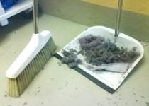 Dammig tvättstuga