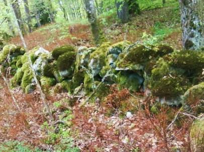 Stenmur och förfruset brunt blåbärsris.