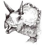 Triceratops012