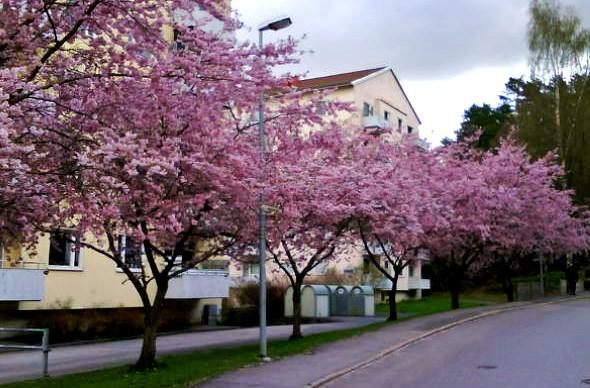 Tureborg Timmerbergsvägen i maj