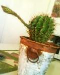 Kaktus 2013-06-18