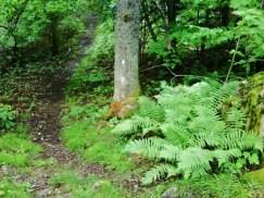 Många stigar i skogen