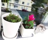 På fönsterblecket får blommorna lite extra värme när hösten kommer.