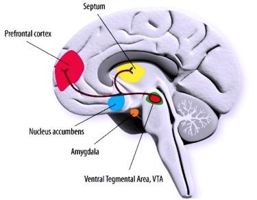 Hjärnans områden