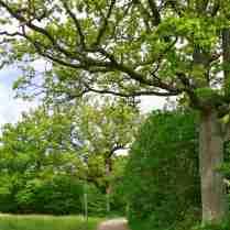 Ekar längs vägen mot Bodele badplats.