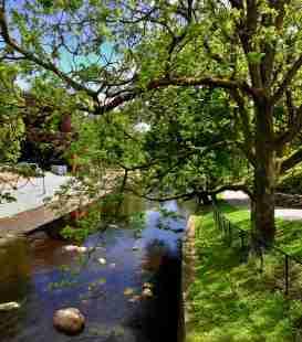 Hasselbacksparken är en lummig oas för folk och fåglar.