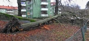 Omkullfallet träd