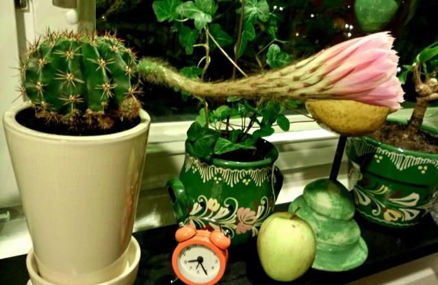 3-kaktus