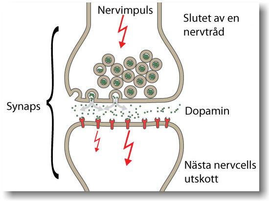 serotonin vad är det