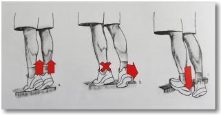 Excentrisk träning för hälsena