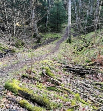 Skogen hemmavid 2